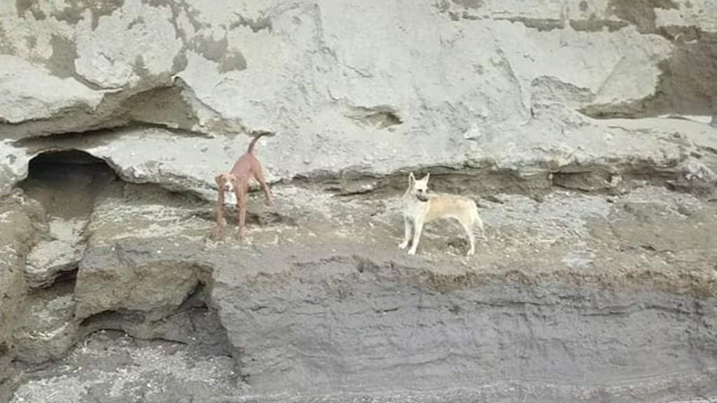 Promete el gobernador Barbosa rescate de perros que cayeron a socavón - Spay y Spike, perros que cayeron al socavón gigante en Puebla. Foto de Ursva
