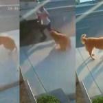 #Video Perro asusta con ladridos a hombre en la calle; provoca que lo atropellen