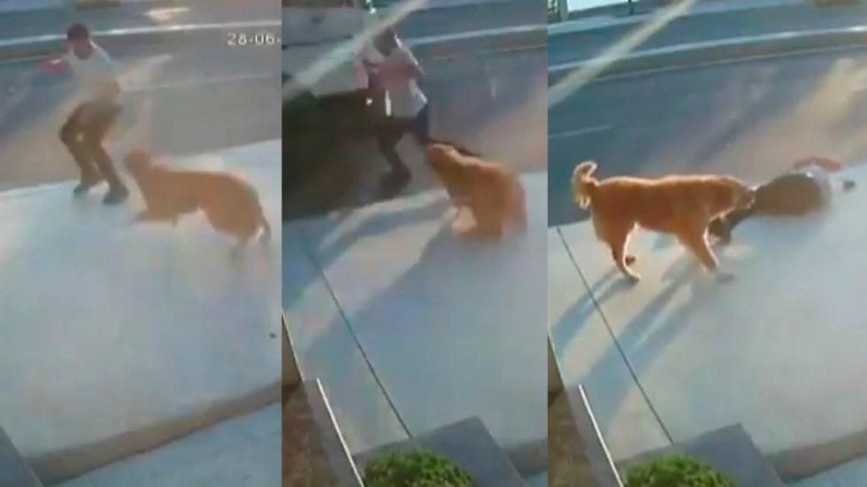 #Video Perro asusta con ladridos a hombre en la calle; provoca que lo atropellen - Atropello de hombre que se asustó por ladridos de perro. Captura de pantalla