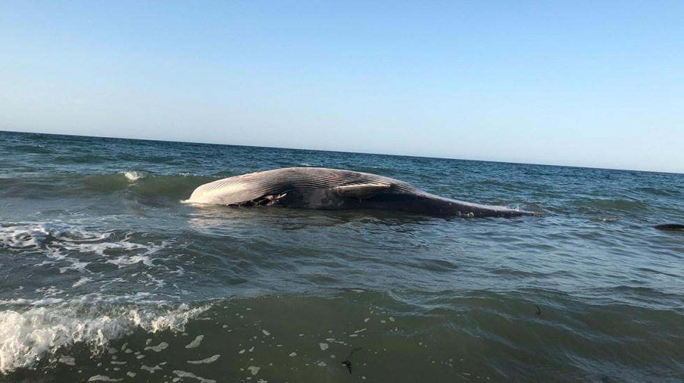 #Video Ballena muere tras ser regresada al mar en Puerto Peñasco - Ballena muerta en Puerto Peñasco, Sonora. Foto de @EdgarHe48665342