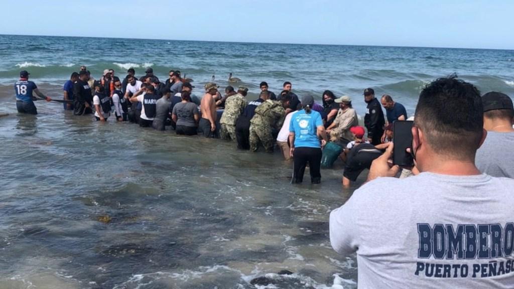 Rescatan a ballena varada en Puerto Peñasco, Sonora - Rescatan a ballena varada en Puerto Peñasco, Sonora. Foto de Michelle Rivera