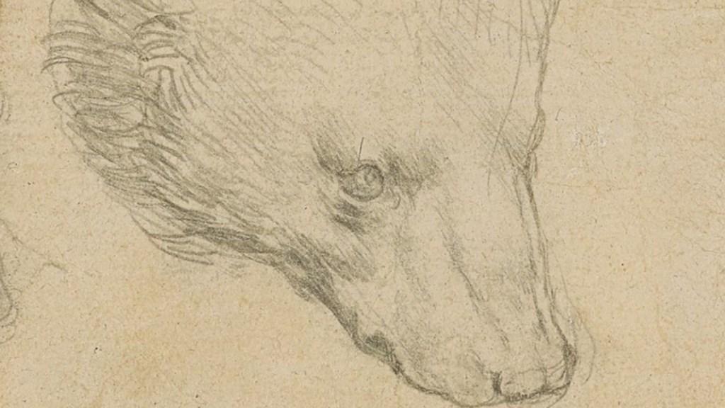 Boceto de oso de Da Vinci alcanza precio récord en subasta - Boceto 'Cabeza de oso' de Leonardo Da Vinci. Foto de Christie's