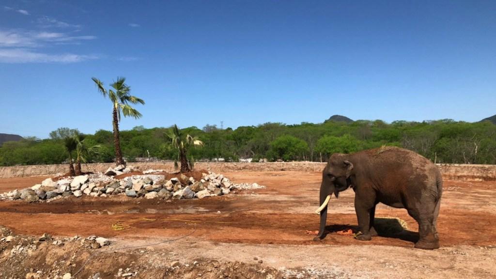 Trasladan al elefante Big Boy a un nuevo hogar - Trasladan al elefante Big Boy a un nuevo hogar.  Foto Especial