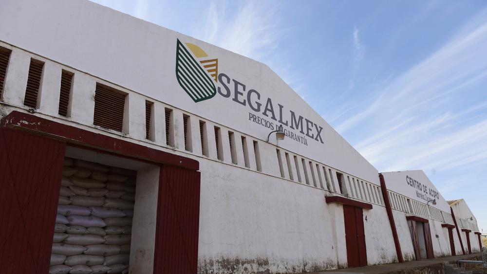 Segalmex adjudica 797 mdp a red de empresas fantasmas - Segalmex
