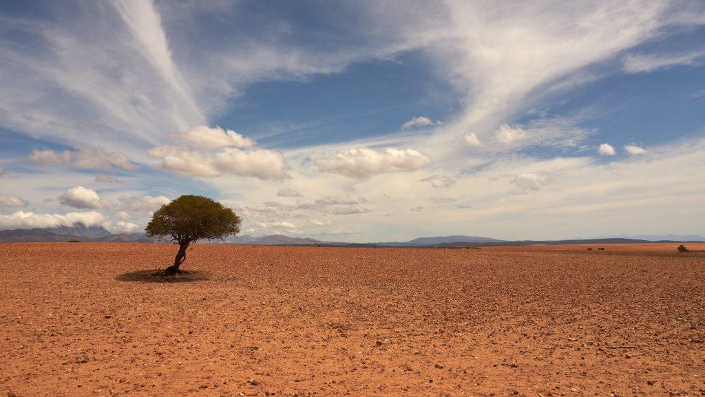 Julio de 2021, el mes más caluroso que ha tenido hasta ahora la Tierra - Foto de Wolfgang Hasselmann para Unsplash.