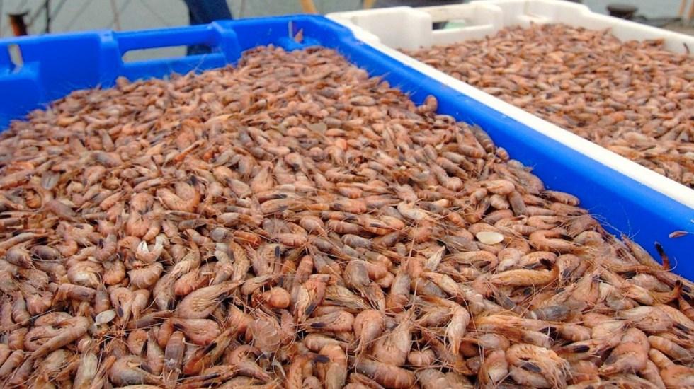 México y EE.UU. levantarán embargo al camarón mexicano - México y EE.UU. levantarán embargo al camarón mexicano. Foto de EFE