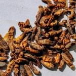 Los insectos, la nueva proteína aprobada en Portugal - Insectos comida alimentos 2