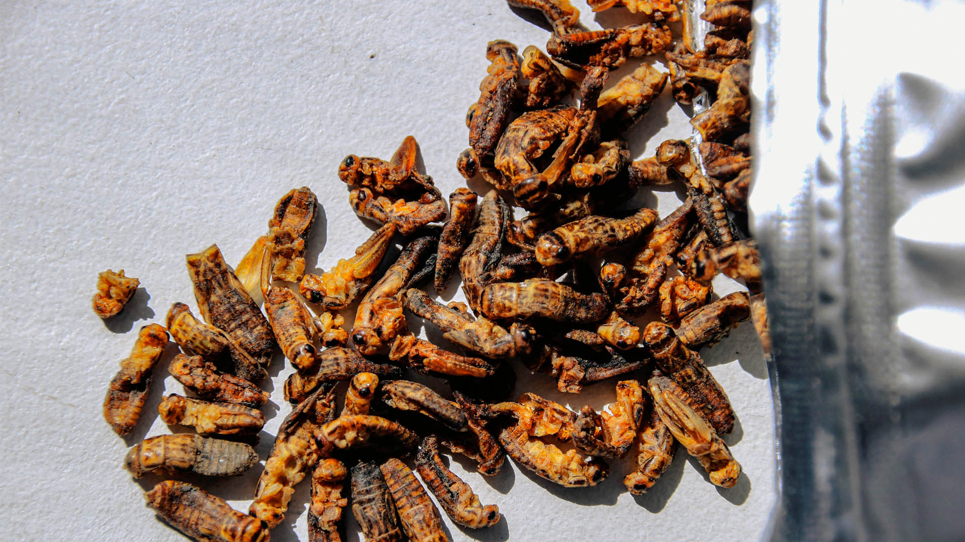 Insectos comida alimentos 2