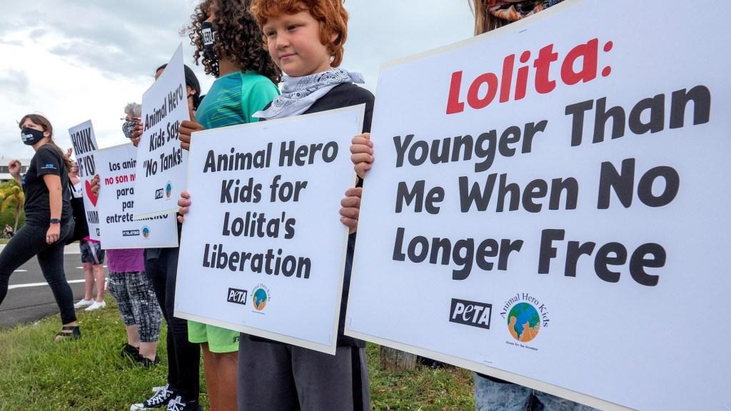 Activistas de PETA exigen liberar en Miami a la orca Lolita - Lolita orca activistas miami PETA