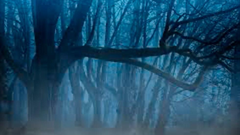 Un bosque, una cueva, un clan