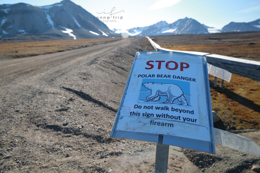 aviso de osos polares