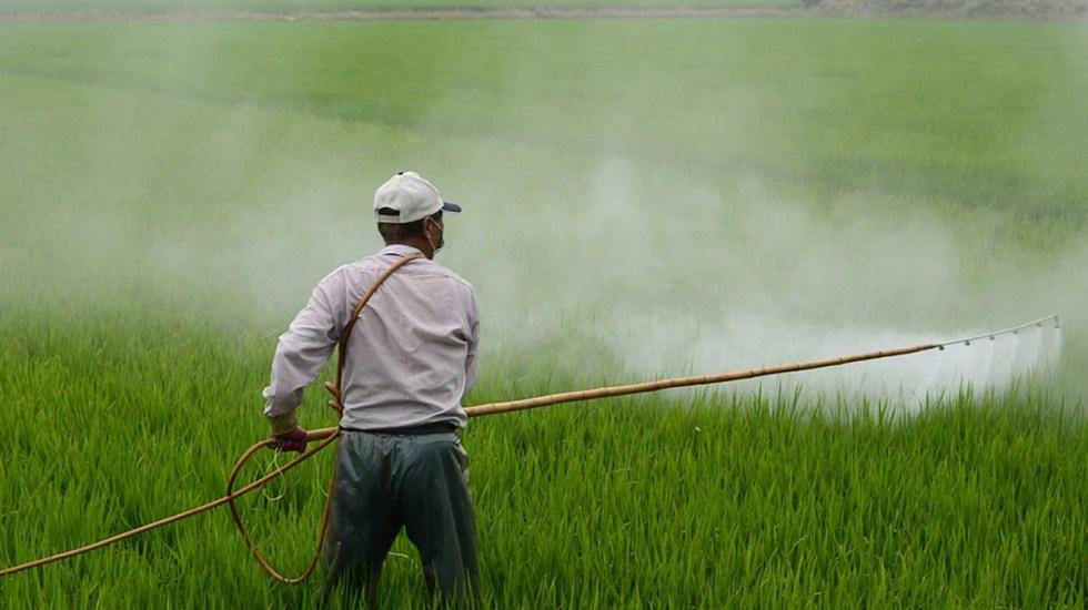 """Nada """"frenará la prohibición del glifosato"""" en México, sentencia Greenpeace - Aplicación de pesticida en cultivo"""