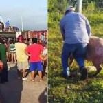 #Video Vuelca tráiler con cerdos en Campeche; pobladores hacen rapiña