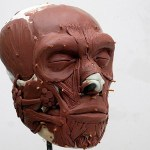 Reconstruyen en Holanda el rostro del primer neandertal neerlandés