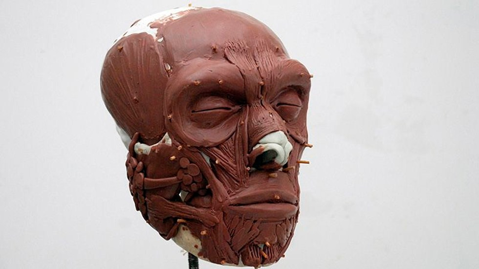 Reconstruyen en Holanda el rostro del primer neandertal neerlandés - Fase de reconstrucción del cráneo del primer neandertal neerlandés, Krijn