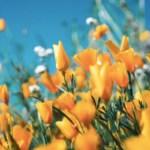 Flores nuevas en raíces viejas, la vida del ser humano