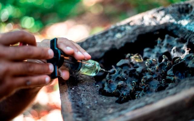 La revolución sostenible que intenta abrirse paso en la Amazonía brasileña - El asistente técnico de meliponicultura Abimael Teles trabaja en una de las colmenas de la comunidad de Santa Maria do Acará. Otra Amazonía es posible, sin deforestación, ni incendios. Es lo que busca una iniciativa colectiva en Brasil a partir del apoyo a negocios capaces de aprovechar el potencial de la selva, sin destruirla, como producir miel con
