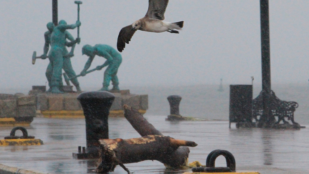 Tormenta tropical Nicholas ocasiona lluvias muy fuertes en noreste de México - Nicholas tormenta Veracruz