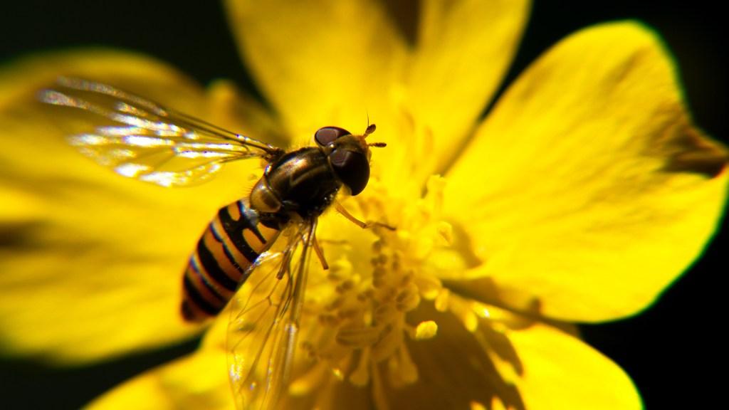 Concluye COP15 con llamado urgente a detener pérdida de biodiversidad - Biodiversidad