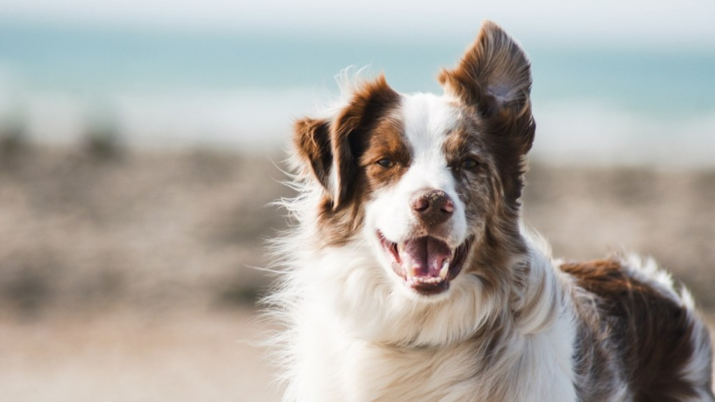 Perro veterinario mascota animal