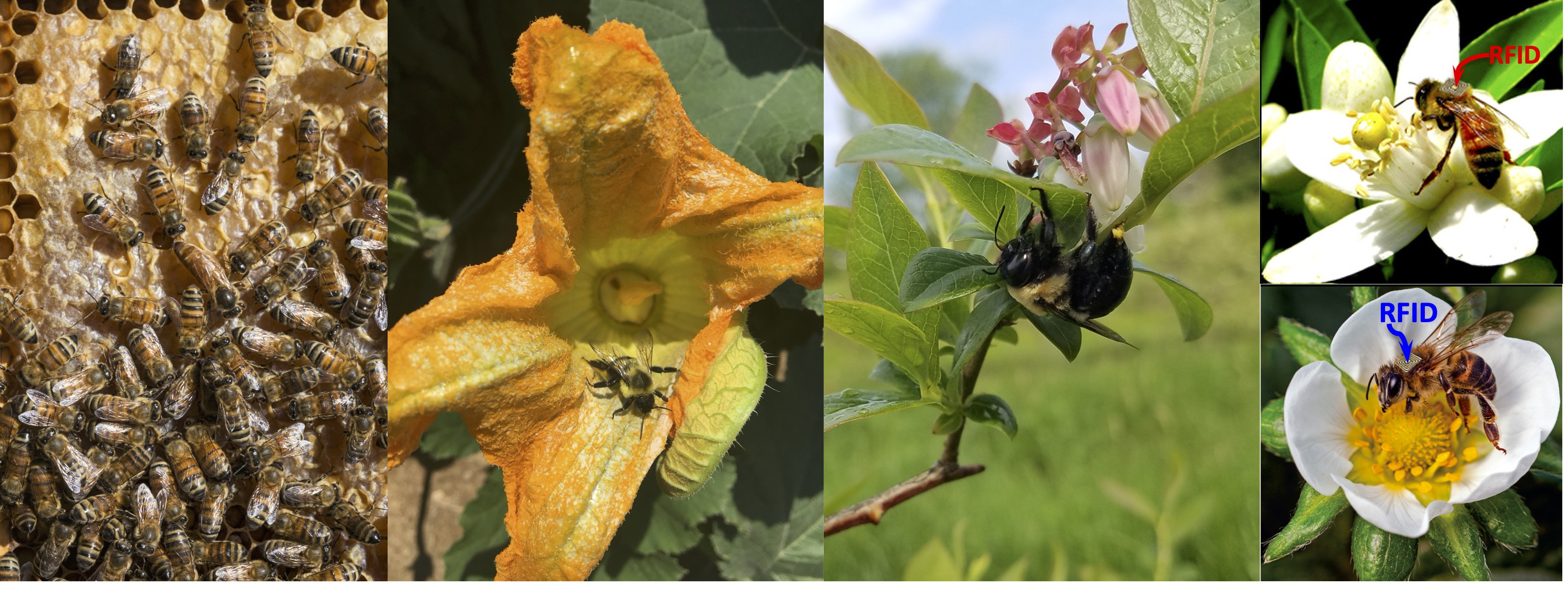 NSF-iRES Program: Pollinators in Changing Climates