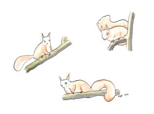 ecureuils_1