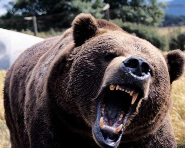 熊アイキャッチ