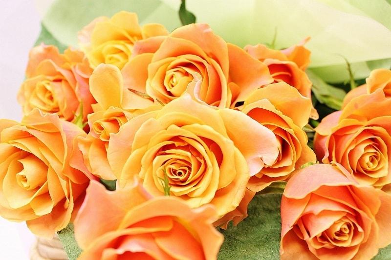 オレンジバラ画像