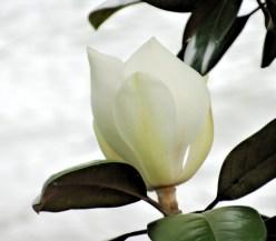 fleur-jardindesplantes-nantes-curiouscat-dsc05829-min