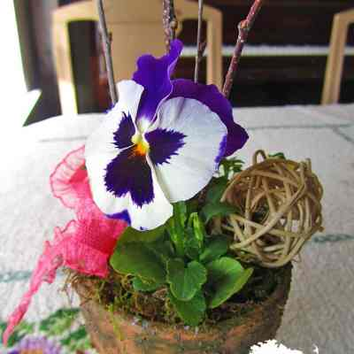 Add Some Pretty to your Pansy Pots