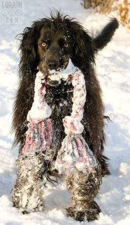 snow-ebby-02-013017