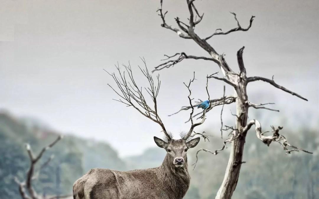 Chamanisme : comment trouver son animal totem ?