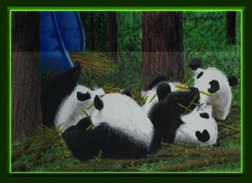 Panda eats Bamboo. Lorberboim Soft Pastel Painting.