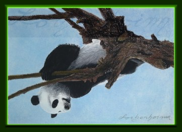 Panda on tree. Lorberboim Soft Pastel Painting.