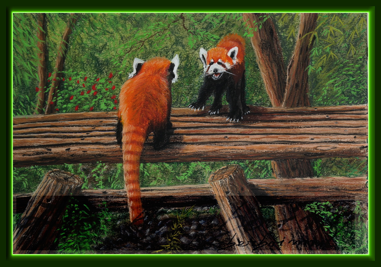 Red Panda eats Bamboo. Lorberboim Soft Pastel Painting.