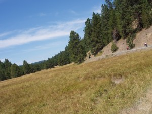 a road follows the edge of a meadow backed by a forested hillside