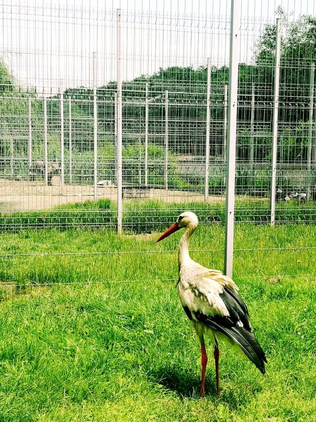 barza de la gradina zoologica din Sibiu
