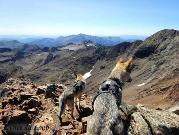 randonnée chien loup tchécoslovaque