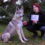 CSAU chien loup tchécoslovaque