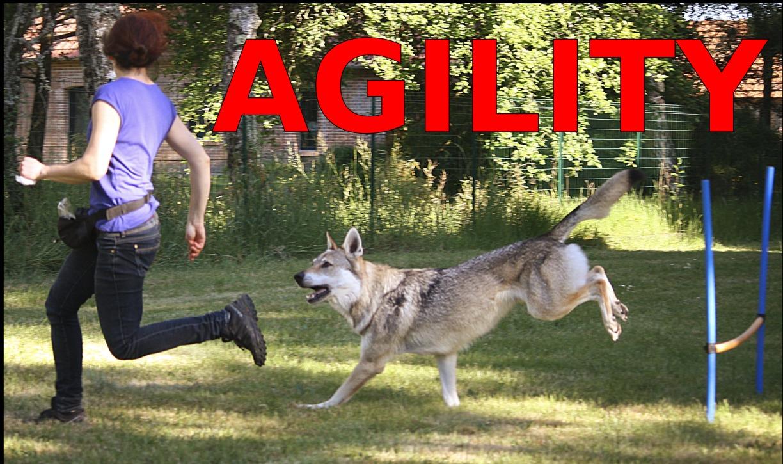 loree-du-loup_agility_chien-loup