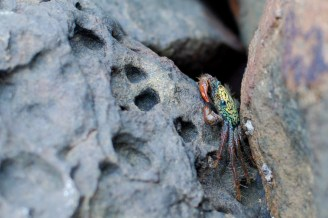 un petit crabe / a crab in the rocks