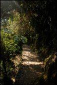 chemin d'accès au pont inca
