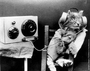 kittyheadphones
