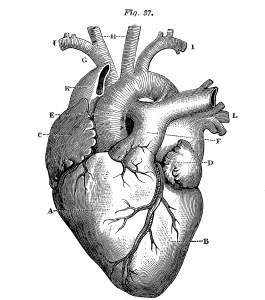heart-images-vintage-graphicsfairy1