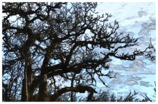 arbre_dessin