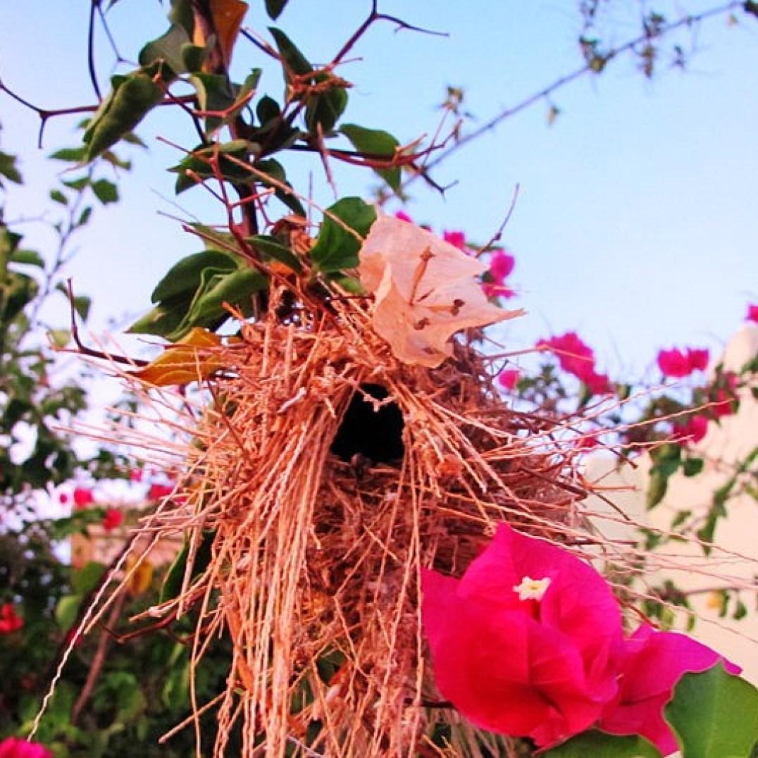 A bird's nest hanging alongside one of the sidewalks in Loreto Bay.