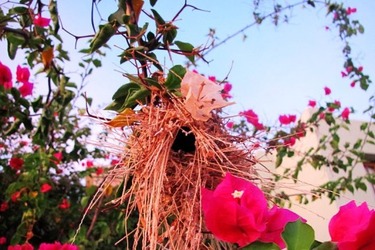 A bird's nest hanging alongside one of the sidewalks in Loreto Bay.