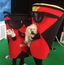 The Secret Life of Pets Premier