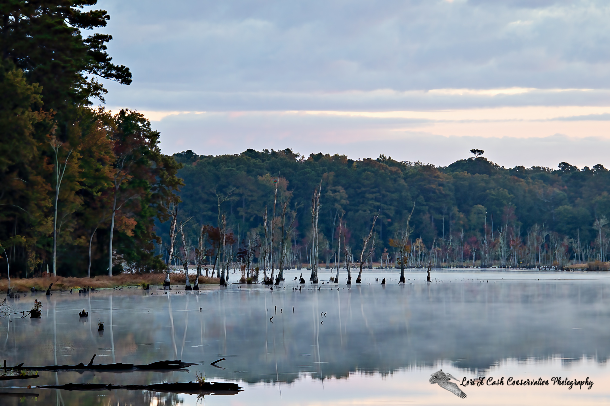 Morning low lying fog over the water along the trees at the Newport News Park in Virginia.