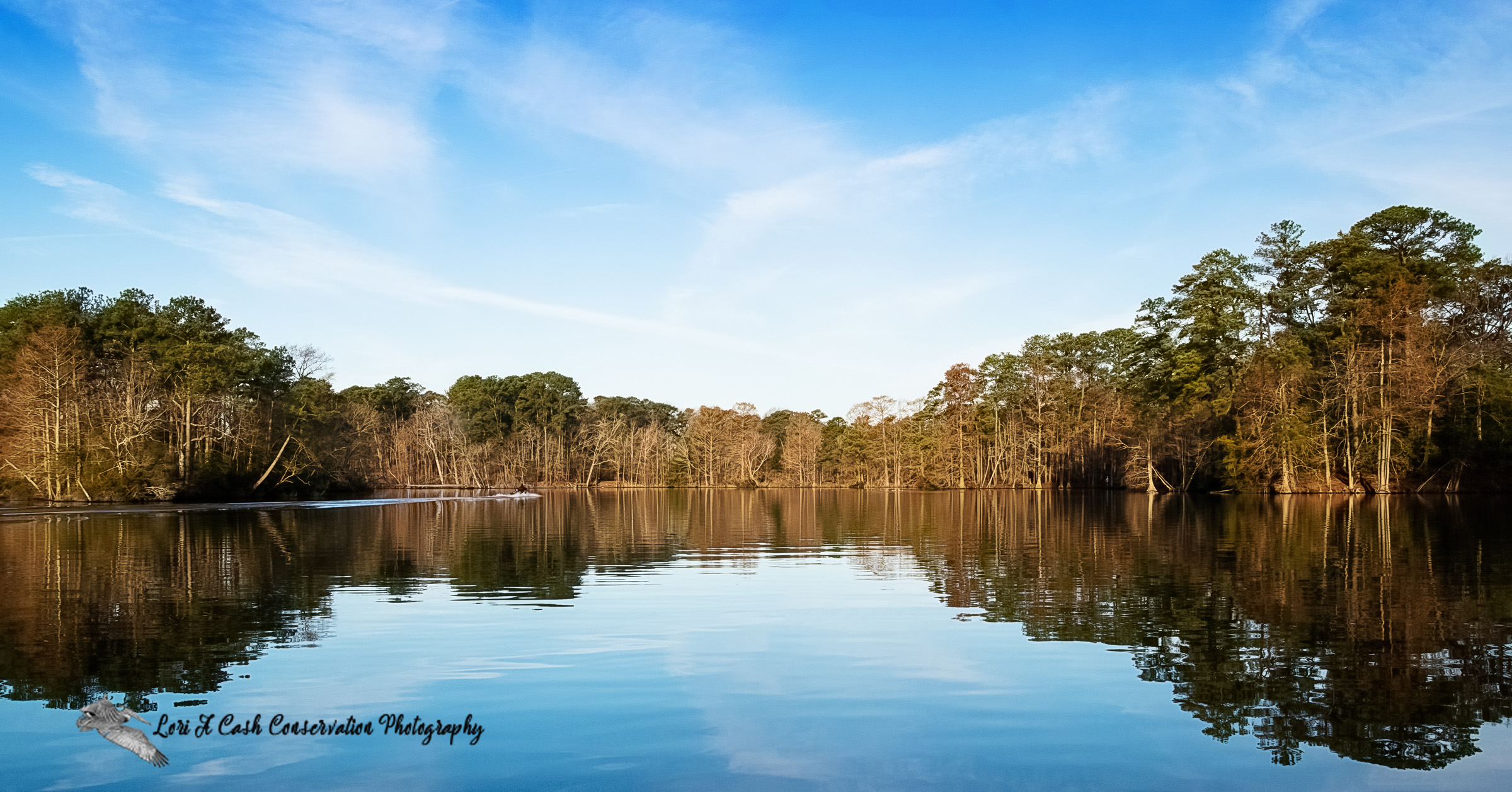Early morning, clear day with blue skies and tree reflections in the water on Lake Lawson at the Lake Lawson Lake Smith Natural Area in Virginia Beach, Virginia.